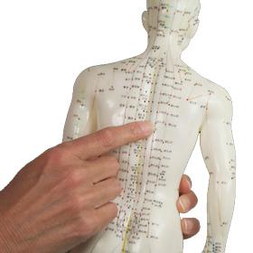 Согласно теории китайской медицины, причиной любых заболеваний является нарушение работы одного из этих 12 внутренних органов.