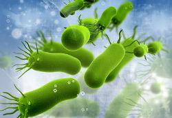 микробы это результат болезни, а не ее причина, если не принимать в расчет заразные заболевания. Настоящая причина появления бактерий в том, что мы создали для них благоприятные условия.