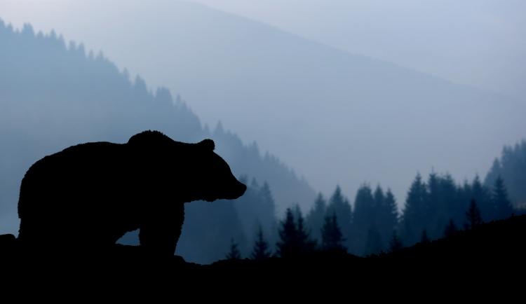 Секреты Правильного Выполнения «Шага Медведя» (Оздоровительный Цигун У Цинь Си)