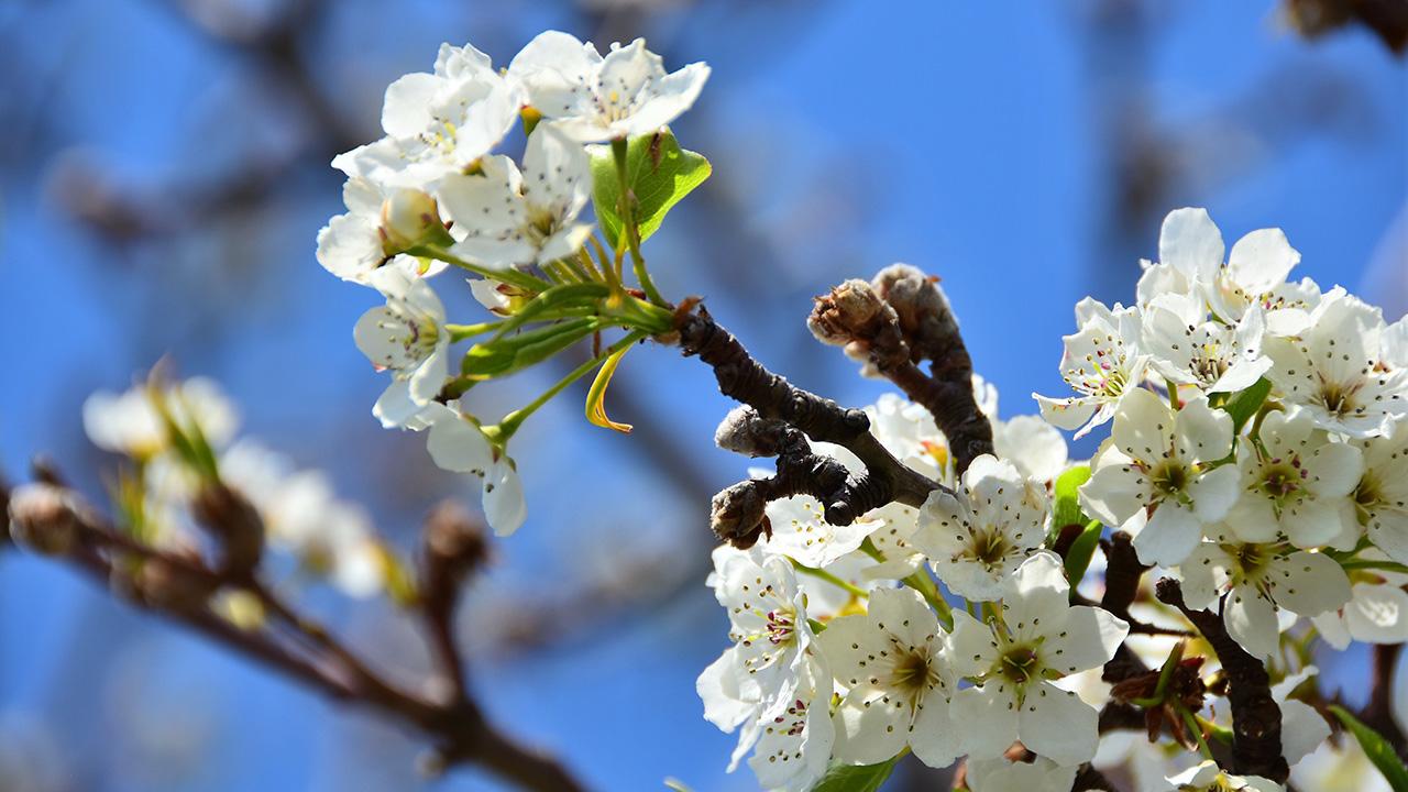 Весна – Лучшее Время Для Укрепления Печени